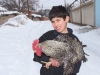 arzni_boy_chicken