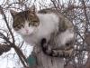 arzni_cat
