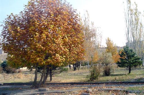fall09