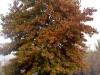 fall02