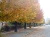 fall05